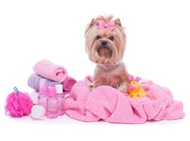 pet-grooming-coupons