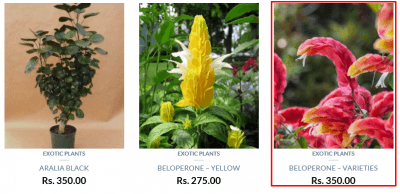 Gardenesia coupons